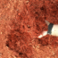 Autumn Red Mulch – Bulk