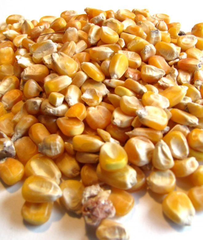 Original Feeds Whole Corn (Non-GMO)